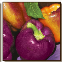 Purple_bell_peppers